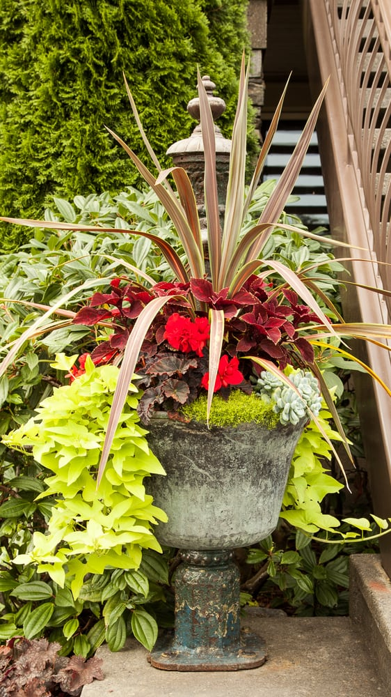 Essential Gardeners