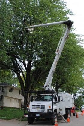 Photo Of Omaha Tree