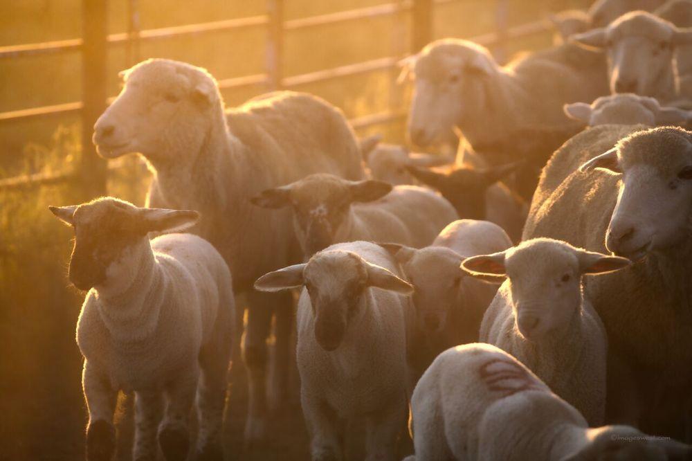 Mountain Meadow Wool: 22 Plains Dr, Buffalo, WY