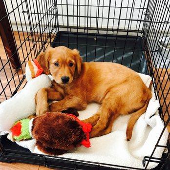 Pet Karma Dog Training
