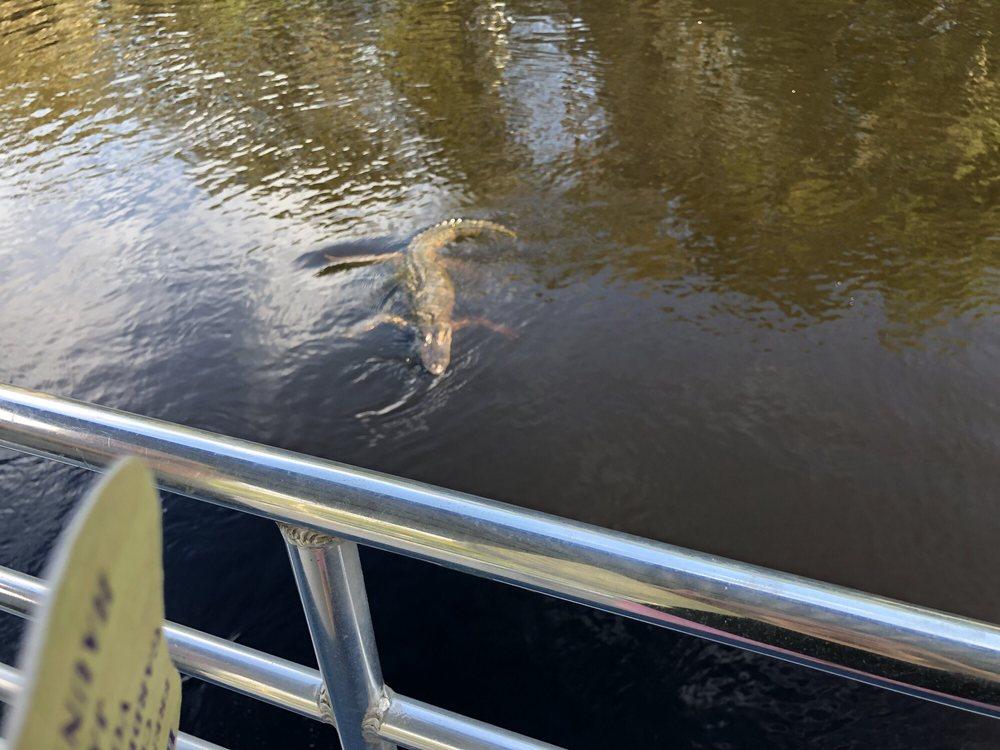 Torres'cajun Swamp Tours: 105 Torres Rd, Thibodaux, LA