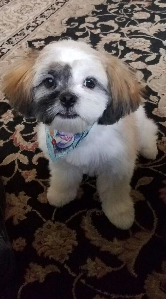 Clip and Cuddles Dog Grooming Salon: 125 Main St, Beech Grove, IN