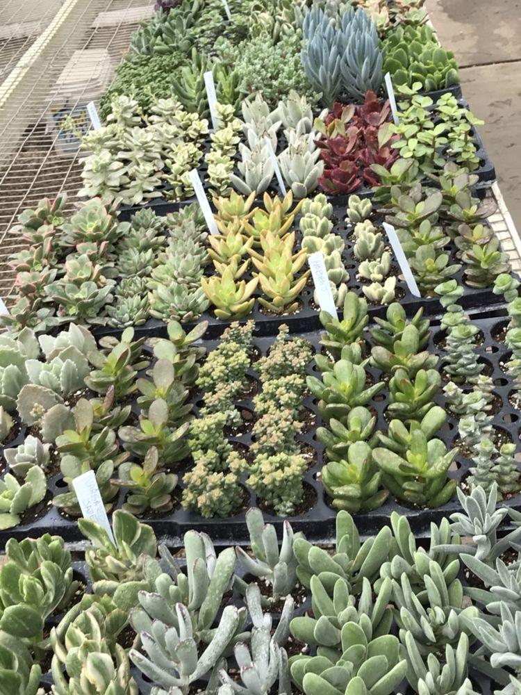 Merlin's Greenhouse & Flowers& Otherside Boutique: 300 Mix St, Oregon, IL