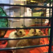 Pet Kingdom USA - 206 Photos & 148 Reviews - Pet Stores