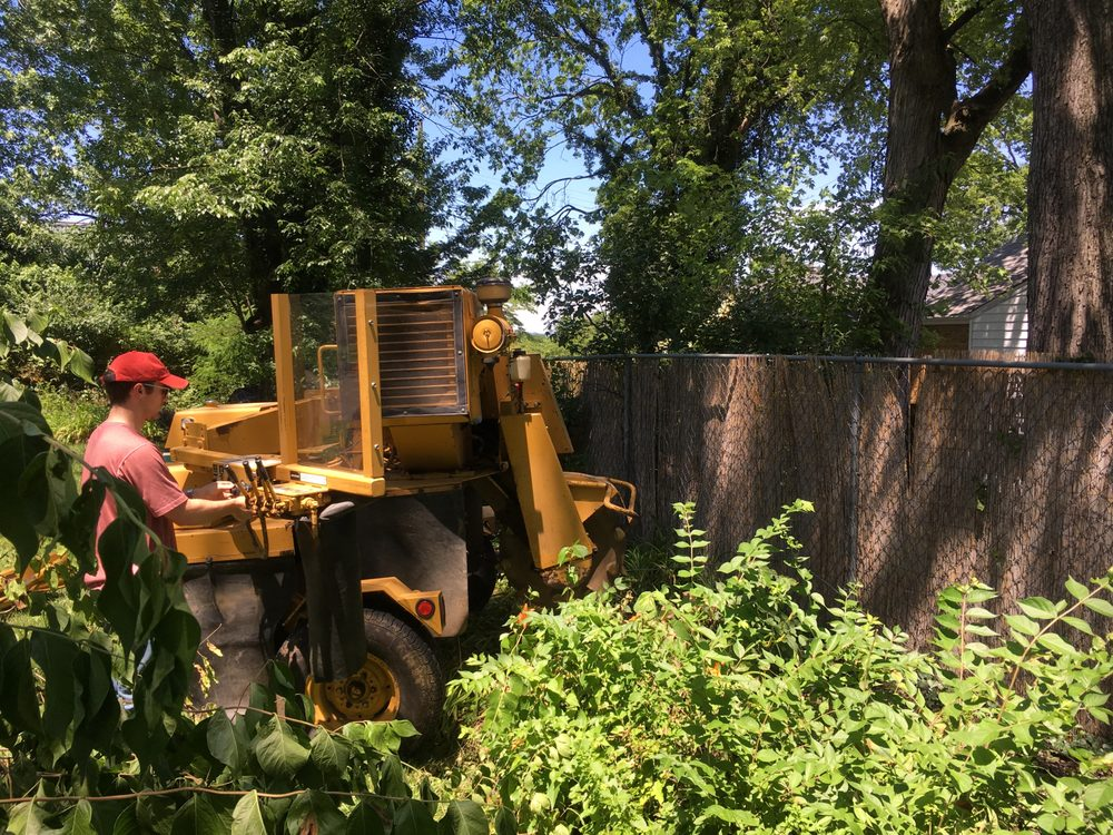 Miami Valley Tree Farm: 1526 Wilmington Rd, Cedarville, OH