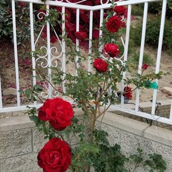 Photo Of Guerrero Rose Farm Nursery Ontario Ca United States