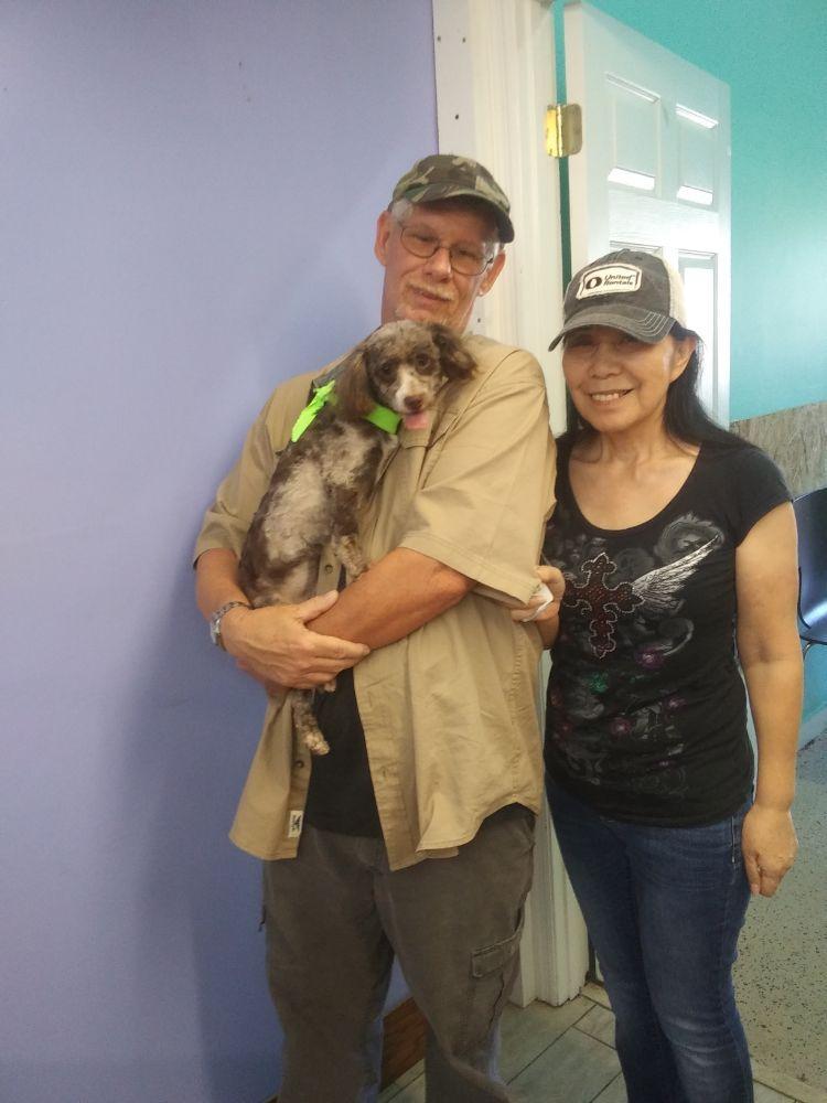 Kingsley pet grooming: 2022-3 Carnes St, Orange Park, FL