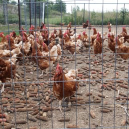 photo of pick at garden patch farms homer glen il united states
