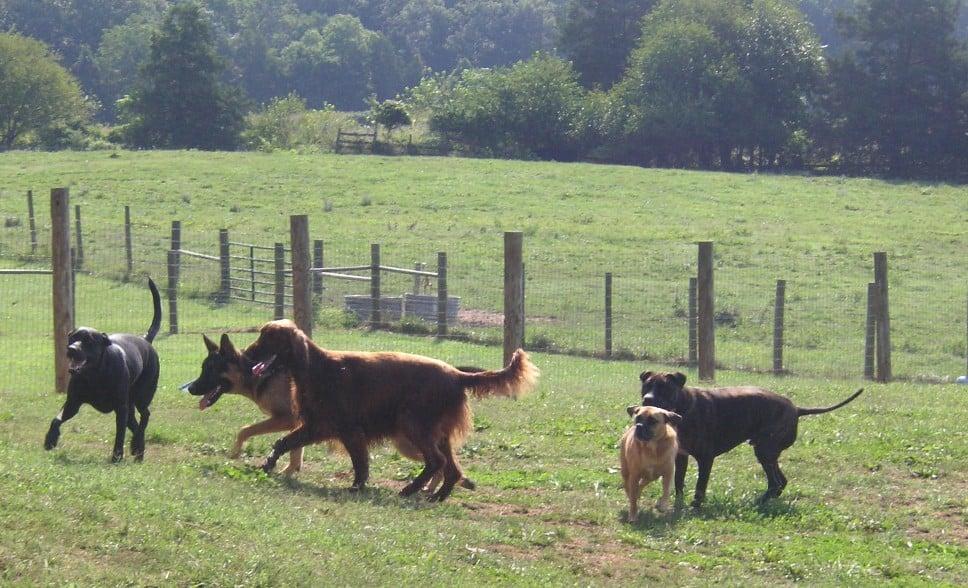 Liberty Hill Pet Resort: 10401 Green Rd, Bealeton, VA