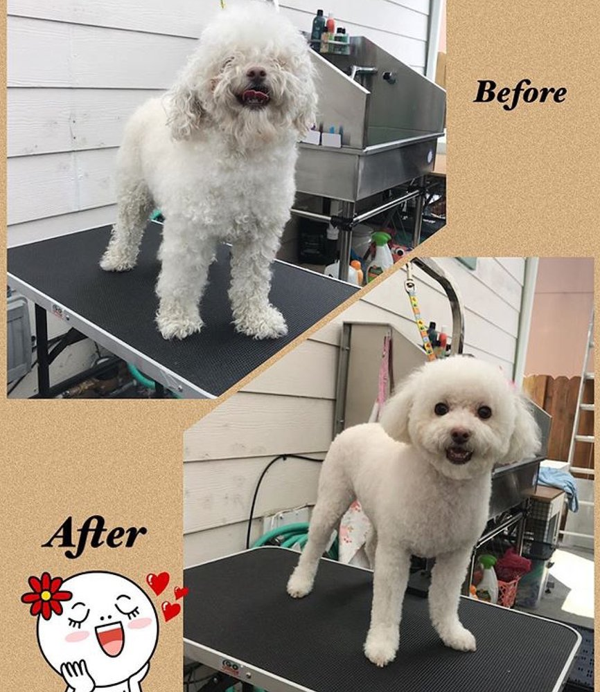 Good Dog Grooming: 49 Blanca Ln, Watsonville, CA