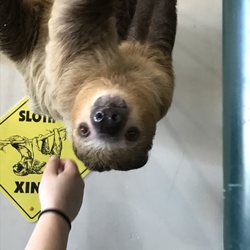 dog grooming flower mound