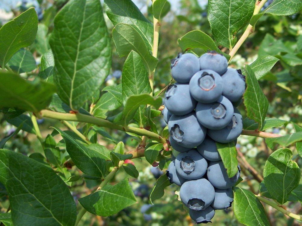 McIntyre's Winery & Berries: 531 McIntyre Ln, Bardstown, KY
