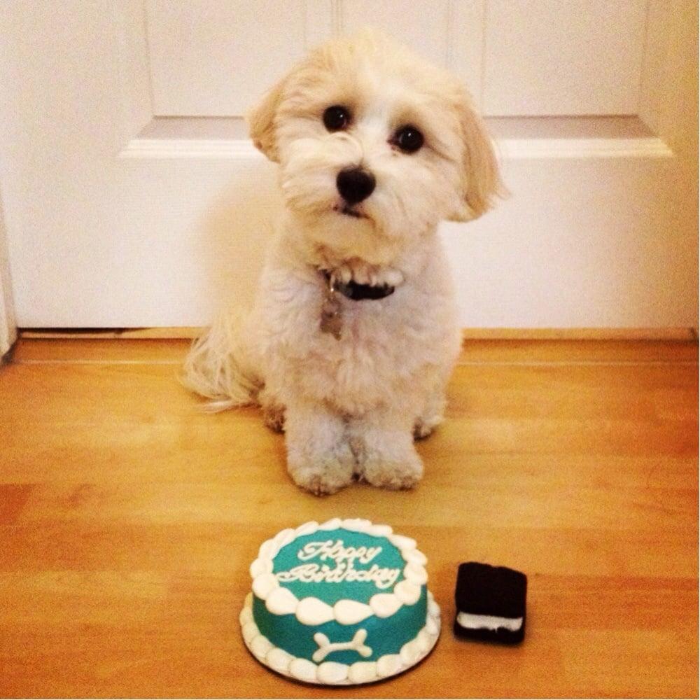 Dog Birthday Cake San Jose Ca