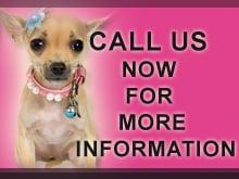 Stewarts Pets: 229 W General Screven Way, Hinesville, GA