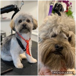 Best Dog Groomers Near Me January 2019 Find Nearby Dog Groomers