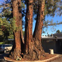 EC Tree Service, Inc - 61 Photos & 238 Reviews - Gardeners