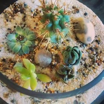 Artemisia 95 Photos 55 Reviews Nurseries Gardening 110 Se