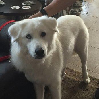Dog Grooming Antioch Ca