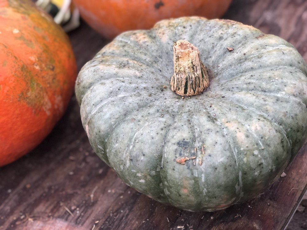 Elwood Pumpkin Farm