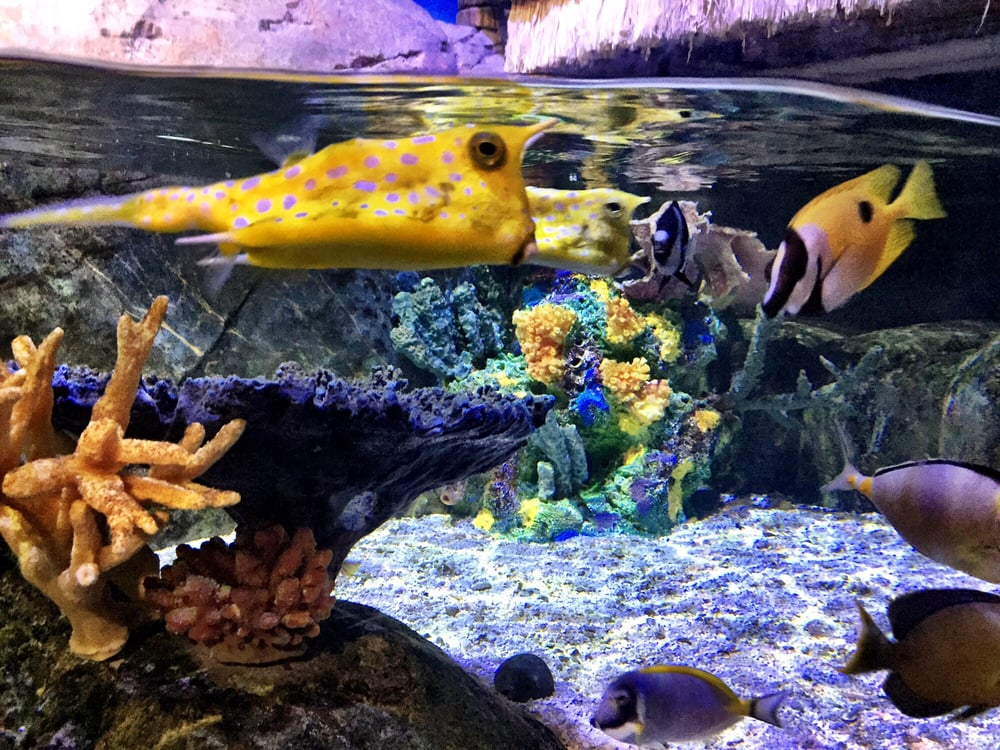cool fish looks like a pineapple lol yelp