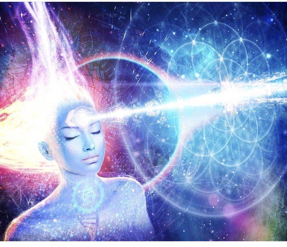 The Mindful Lotus