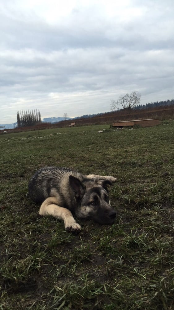 Strawberry Fields for Rover Off-leash Park: 6100 152nd St, Marysville, WA
