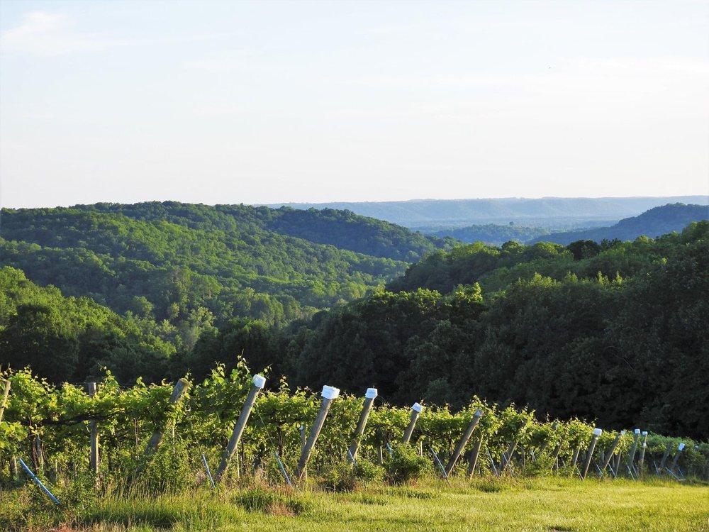 Wild Hills Winery: 30940 Oakridge Dr, Muscoda, WI