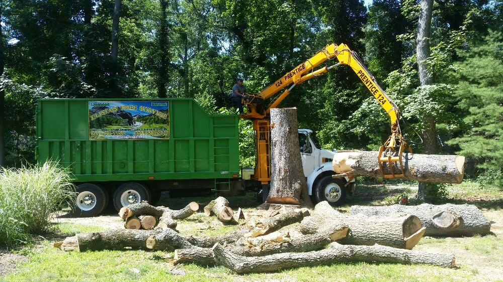 Eliseo Tree Service: 194 Commercial Blvd, Brentwood, NY