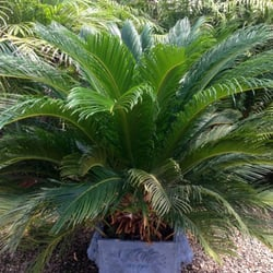 photo of wilkinson nursery landscape co ardmore ok united states ardmore 3 fung shui good