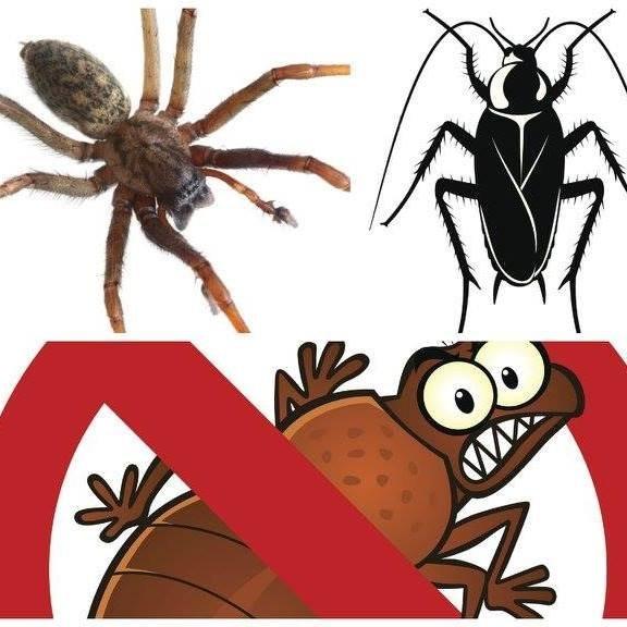 Wild West Pest Management: Gardnerville, NV