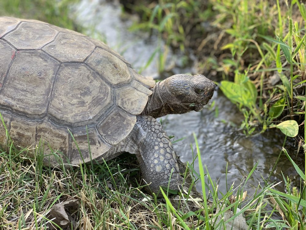 Southern Idaho Reptile Rescue: Buhl, ID