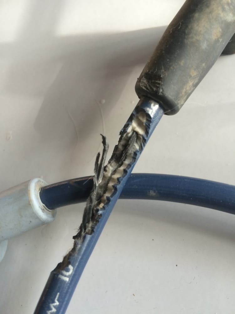 Rodent-chewed spark plug wires missed by Newport Auto in a pre ...
