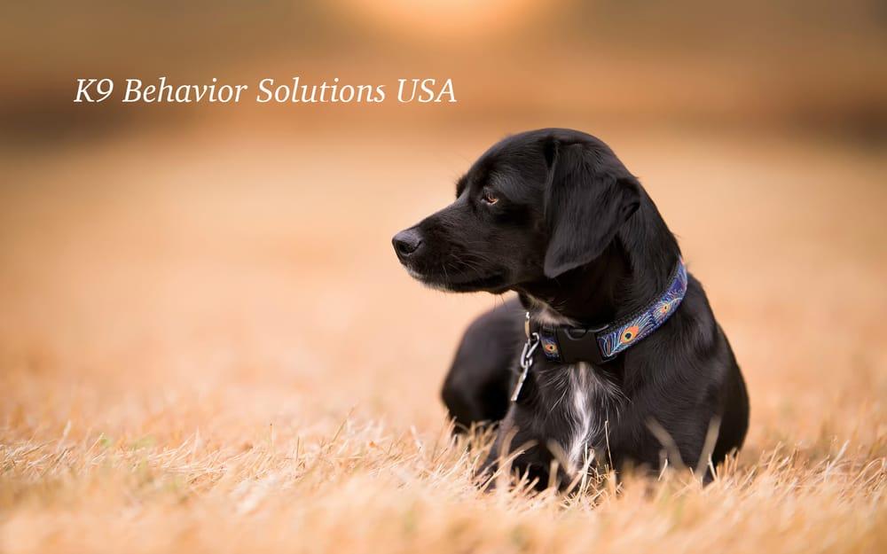 K9 Behavior Solutions USA: 5412 Sirius Dr, Wilmington, NC