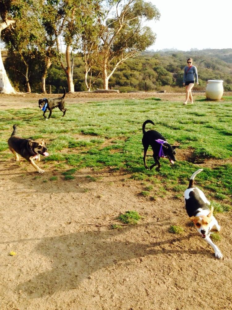 Dog Park San Diego Yelp