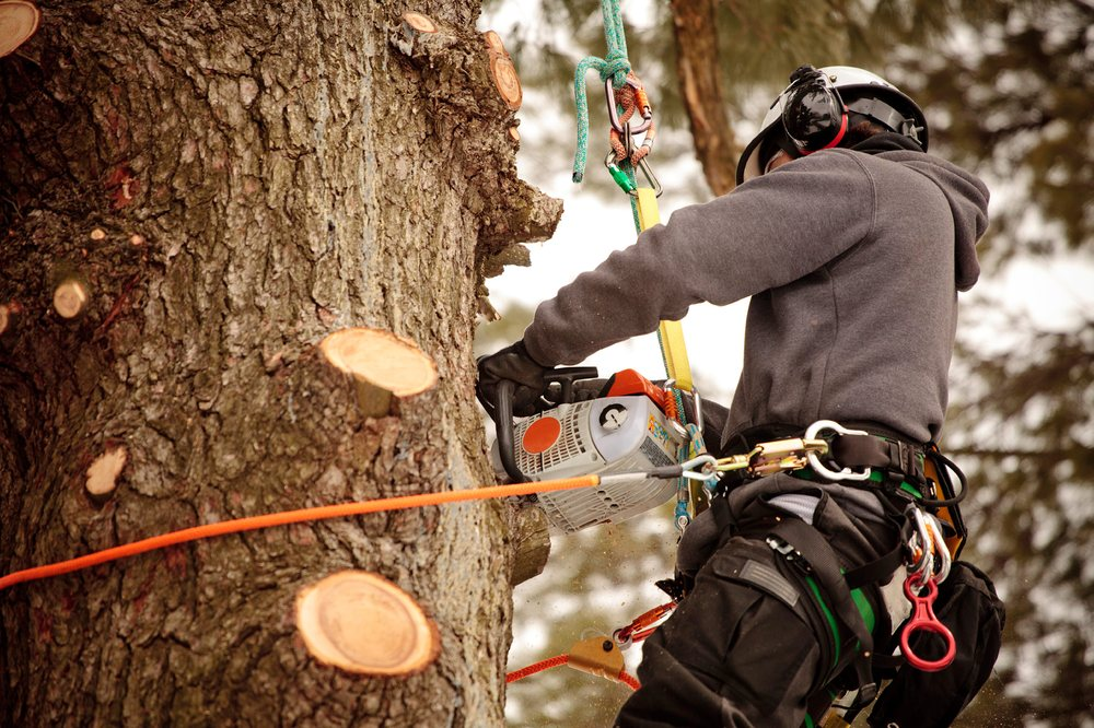 SK Tree Services
