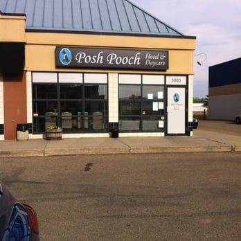Posh pooch 10 reviews pet sitting 3803 99 street for Kitchen cabinets 99 street edmonton