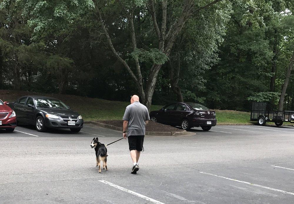 James River Dog Training