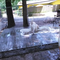 Graced kennel grooming 38 photos 10 reviews pet sitting photo of graced kennel grooming augusta ga united states fun in solutioingenieria Image collections