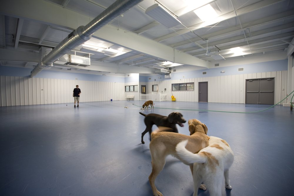 Paws Pet Resort and Spa: 312 E Johnson Ave, Cheshire, CT