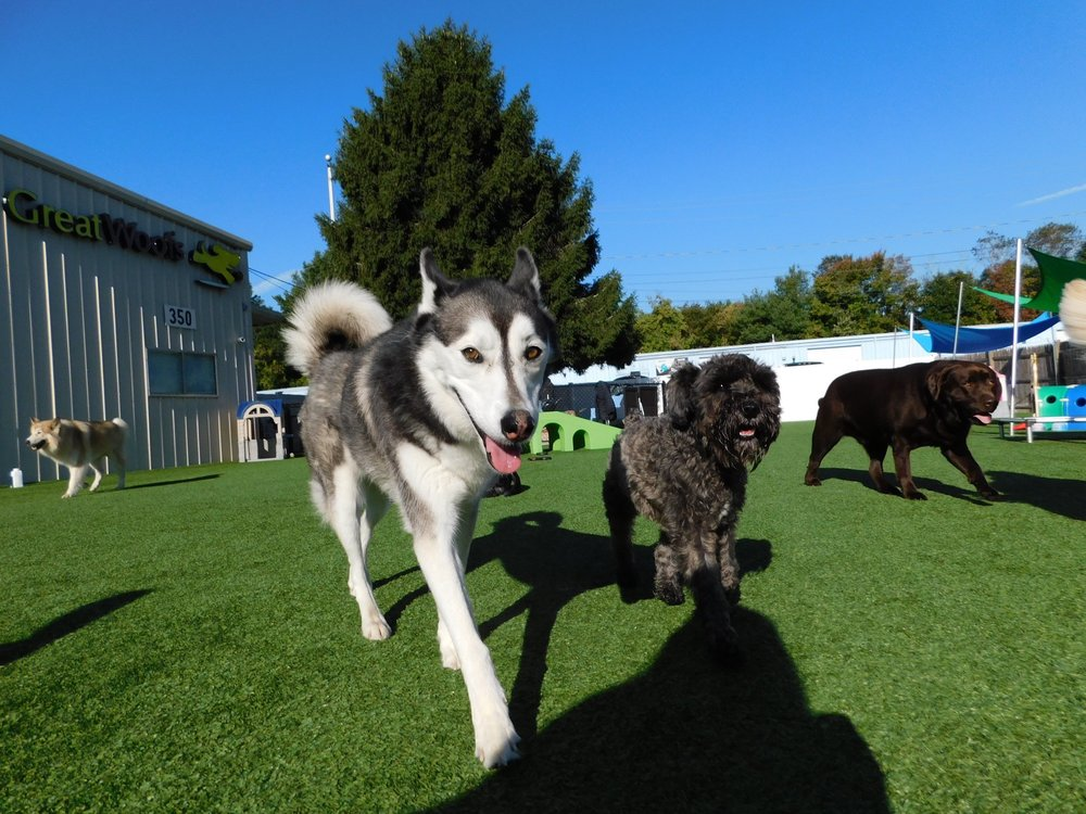 Great Woofs: 350 Old Colony Rd, Norton, MA