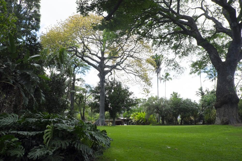Lush green abounds yelp for Foster botanical garden honolulu