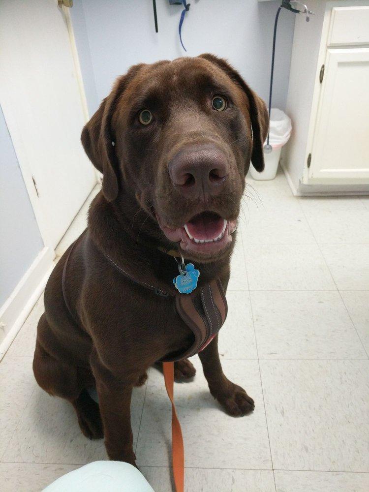Dadeville Animal Clinic: 17830 Hwy 280, Dadeville, AL