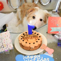 Top 10 Best Dog Birthday Cake In Irving TX