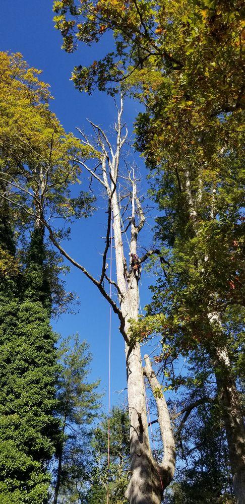 All Seasons Tree Service: Independence, VA