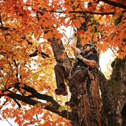 Photo Of Urban Timber Tree Service Portland Or United States