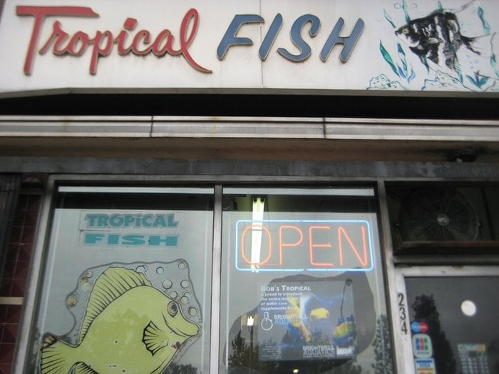 Store front yelp for Fish stores in ma