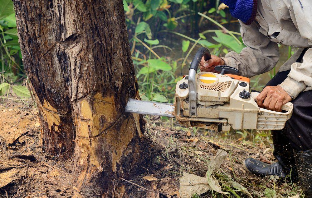 Ben's Tree Service: Belfair, WA