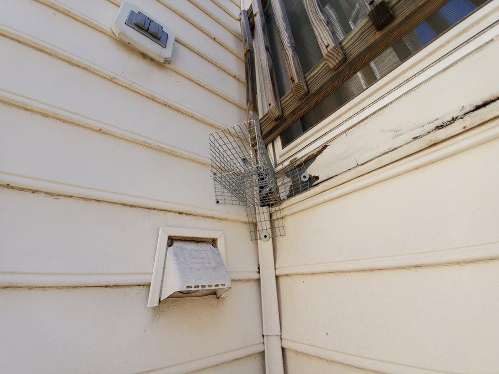 In Home Pest: Herndon, VA