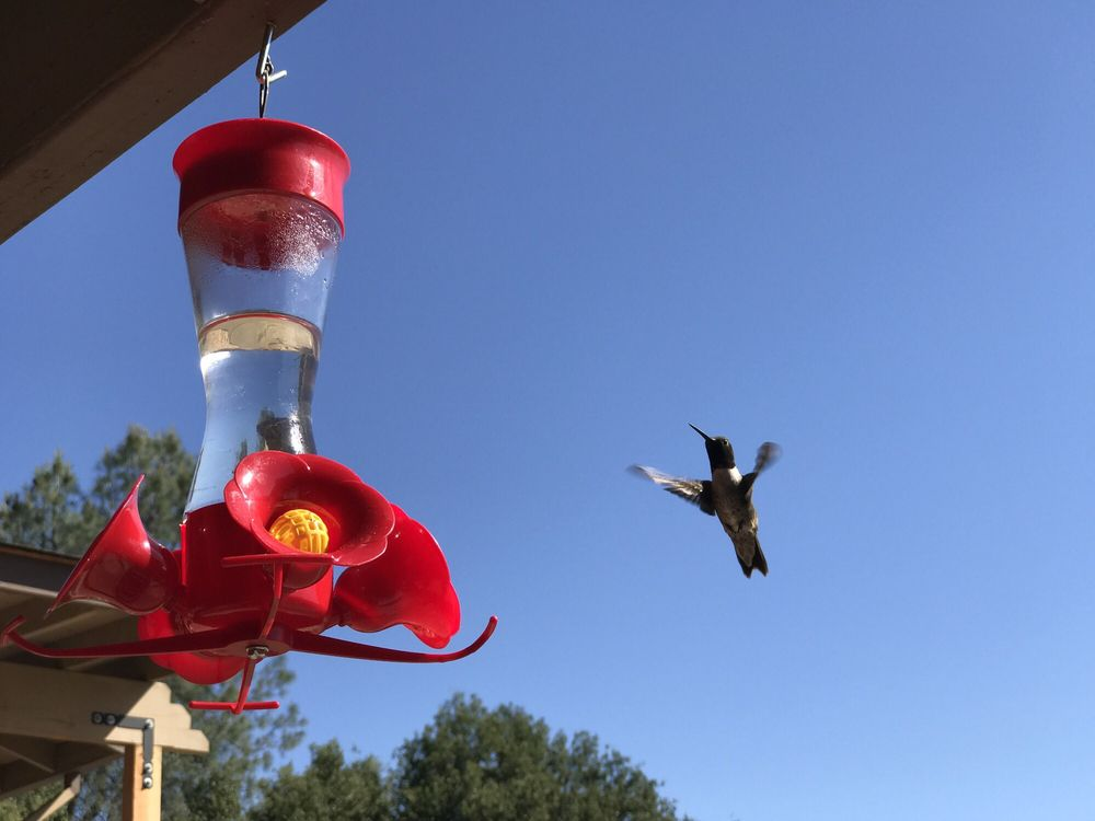 Restful Nest B & B Resort: 4274 Buckeye Creek Rd, Mariposa, CA
