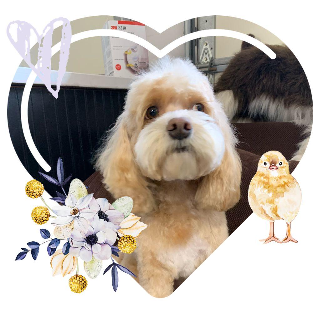 Kelly's Upscale Puppy: 8365 Kickerville Rd, Blaine, WA